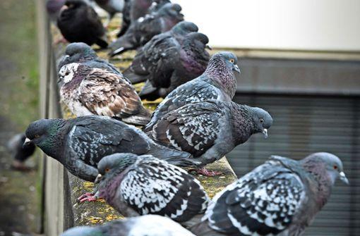 Die Taubenpaste beschäftigt die Gerichte