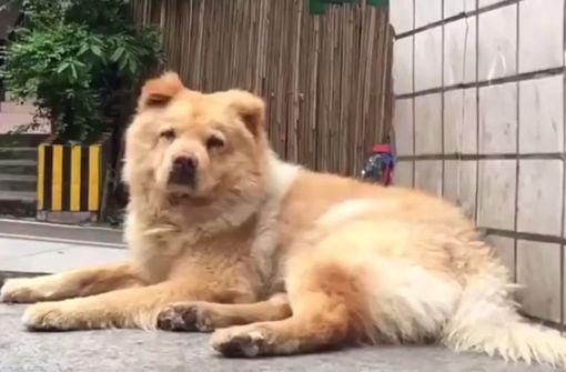 Xiongxiong wartet jeden Tag an der Haltestelle auf sein Herrchen