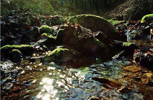 Wasser aus Bächen abpumpen ist verboten