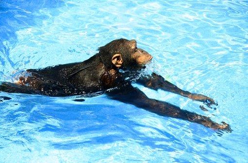 Cooper findet den Pool cool