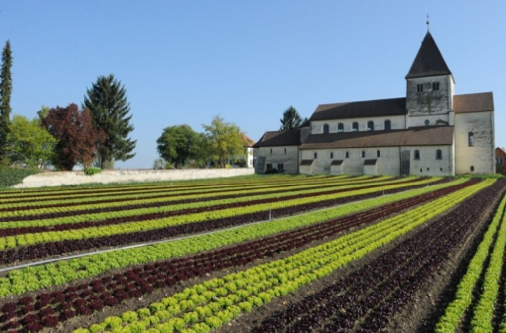 Jede Menge Salat – und wo wächst er? Foto: dpa