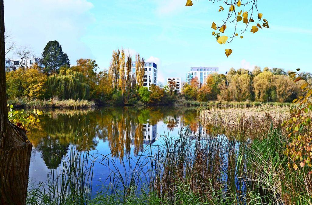 Die Röhrichte am Probstsee sind nur ein Beispiel für ein Biotop, das die Stadt schützen möchte. Foto: Archiv Hintermayr