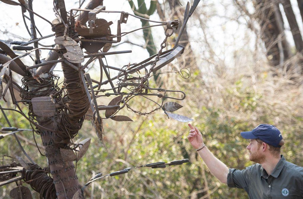 Prinz Harry ist gerade mit seiner Familie in Afrika unterwegs. Hier betrachtet der Herzog von Sussex eine Baumskulptur, die Parkwächter aus Schlingen gebastelt haben, die Wilderer ausgelegt hatten. Foto: dpa/Dominic Lipinski