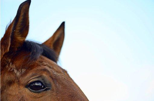 Mädchen von Pferd einen Kilometer mitgeschleift