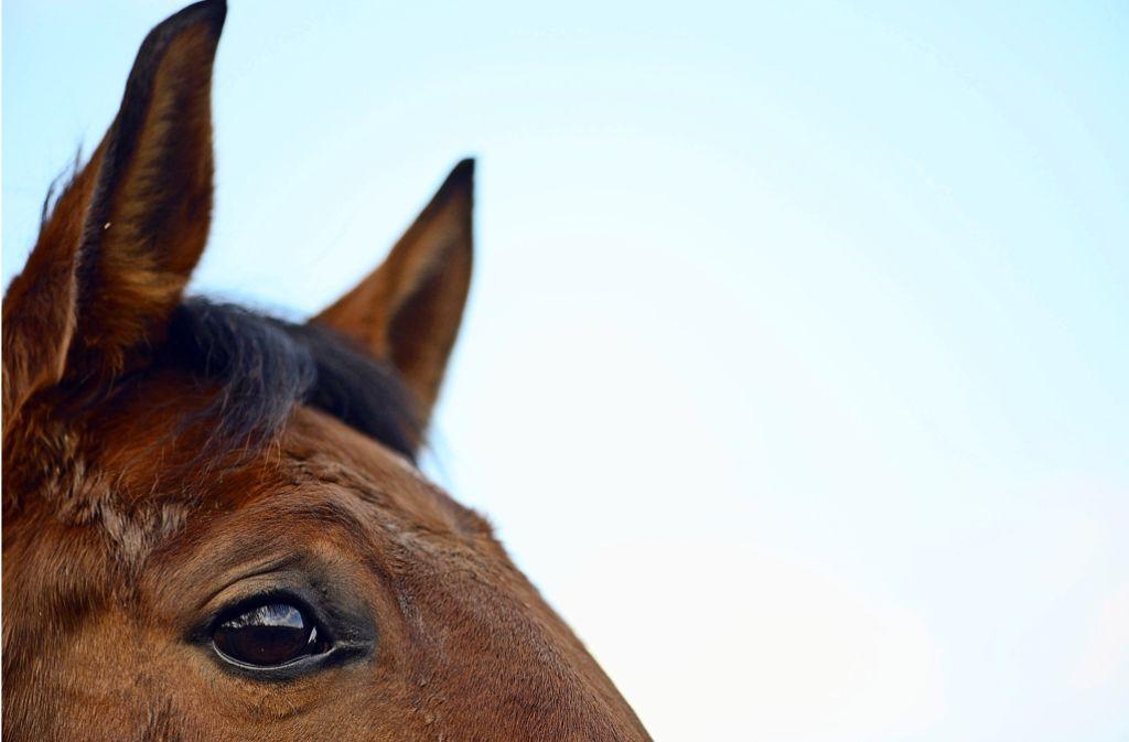 Ein Pferd hat am Sonntag in Althütte eine Zwölfjährige mehr als einen Kilometer weit mitgeschleift. Foto: dpa/Symbolbild
