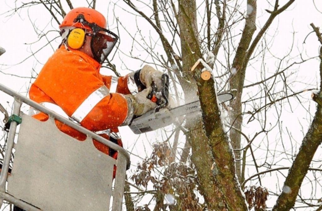 Die Stadt hat neue Regeln zum Baumschutz beschlossen, allerdings mehren sich die Zweifel an deren Sinn. Foto: Günter Bergmann