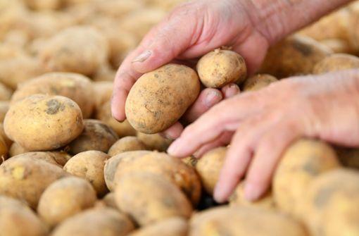 Frauen raufen um Kartoffeln