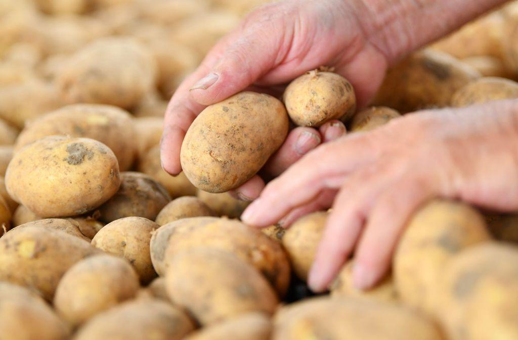 Zankapfel: Zwei Frauen bekamen sich wegen eines Eimers Kartoffeln in die Wolle. Foto: dpa