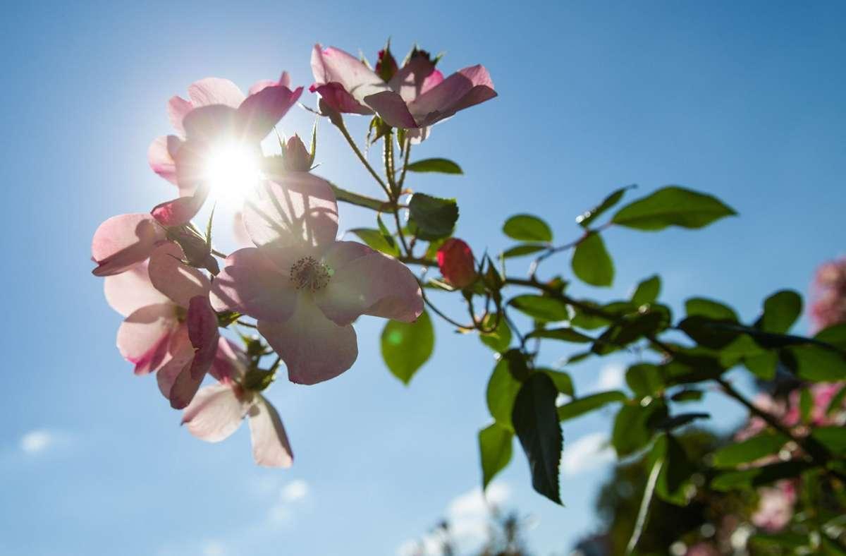Am Sonntag wird es sonnig und warm (Symbolbild). Foto: dpa/Tom Weller