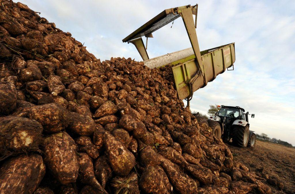 Die Zuckerrübenernte ist gestartet. Doch es sieht nicht gut aus für die Landwirte. Foto: dpa/Carsten Rehder