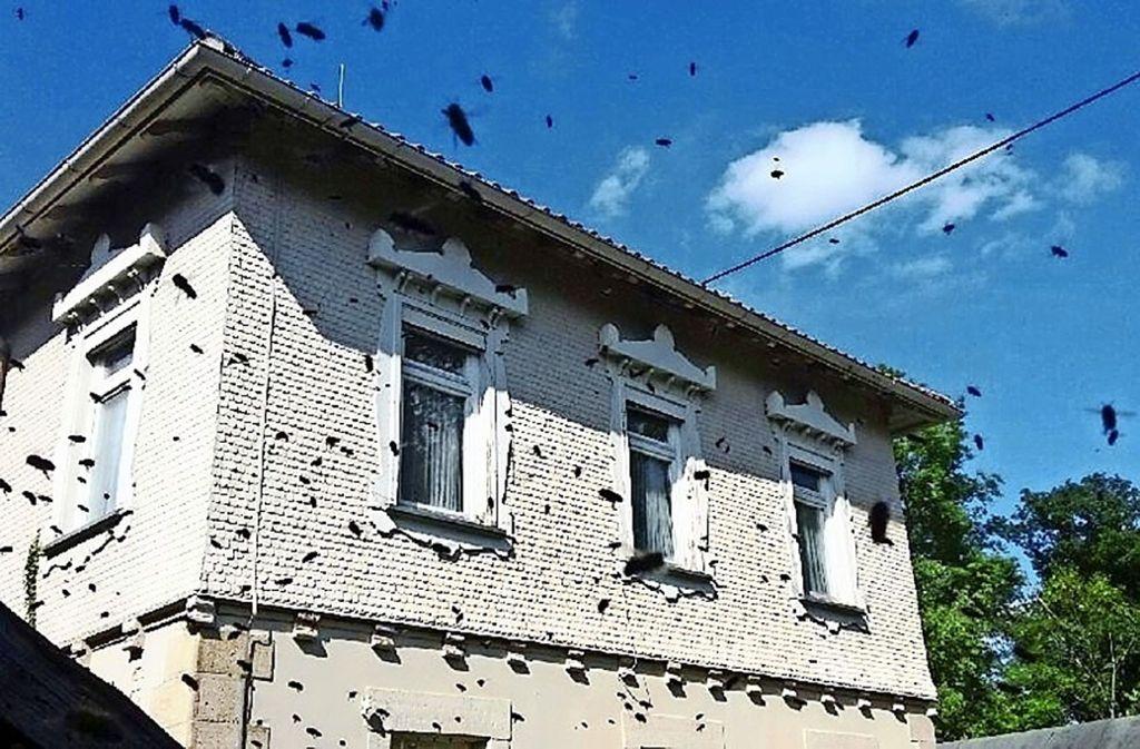 Im Garnisonsschützenhaus ist ein Bienenvolk zu Gast. Foto: Garnisonsschützenhaus e.V.