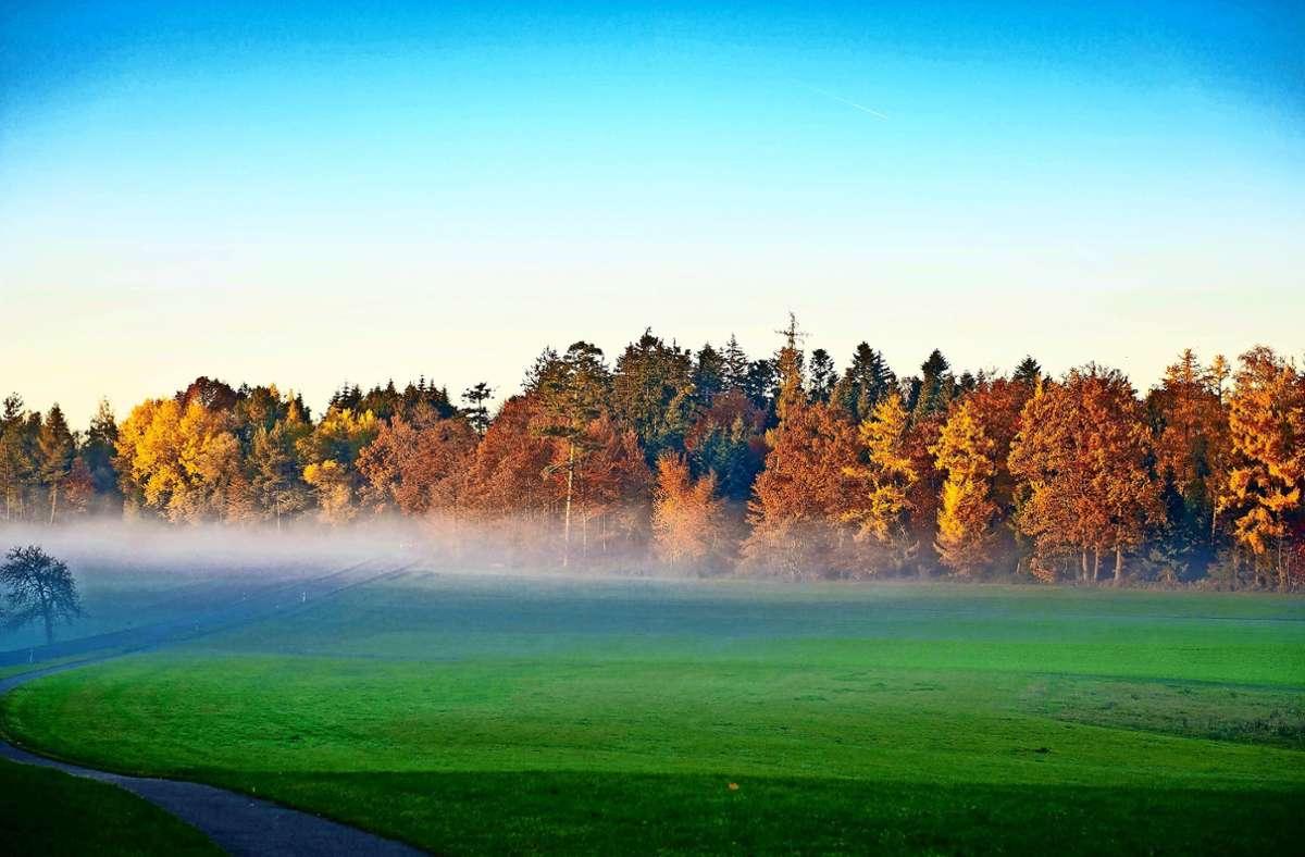Bald wird  sich das Laub der Bäume  wieder herbstlich färben. Der Regen Anfang September hat dem Wald geholfen, ihm fehlt aber immer noch Wasser. Foto: Lichtgut/Hoschek