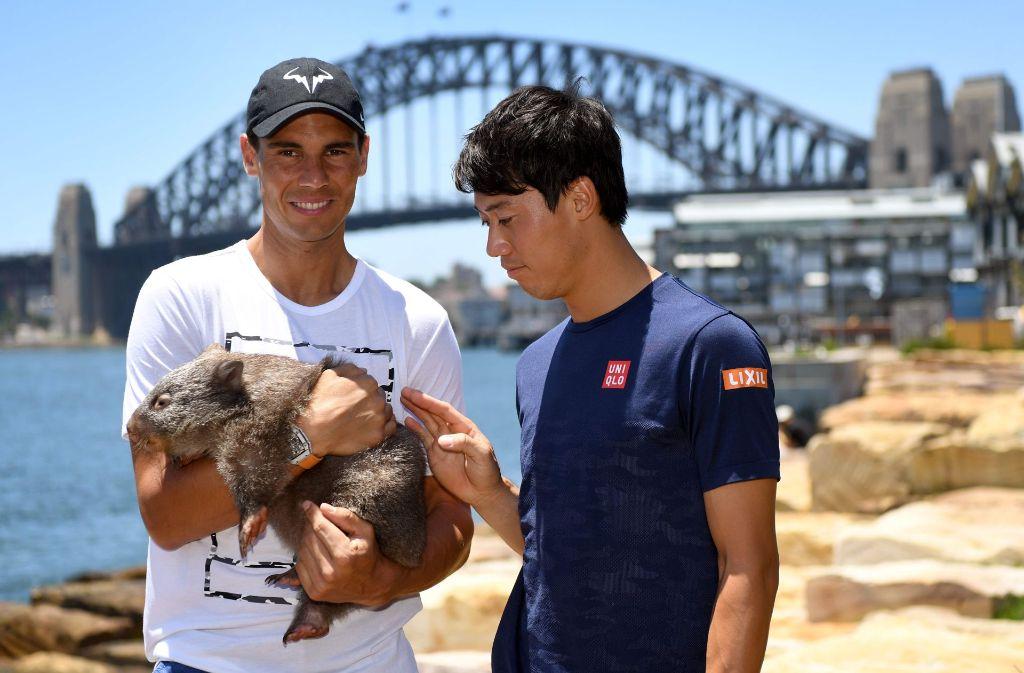Die Tennis-Profis Rafael Nadal und Kim Nishikori knuddeln einen Wombat Lola in Sydney. Foto: AFP