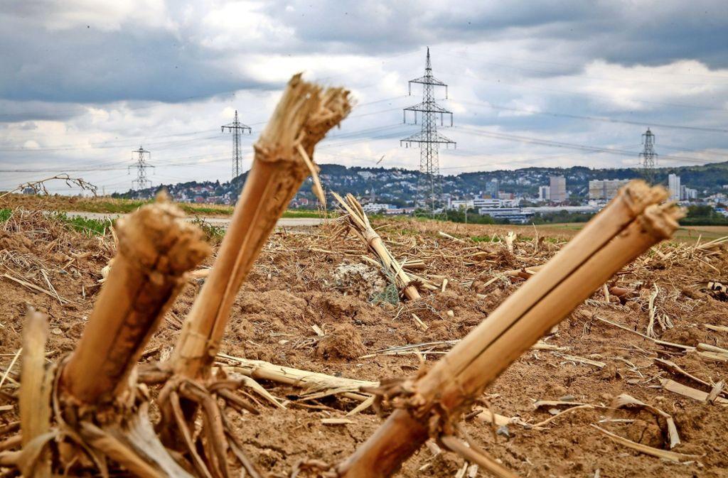 Welche Verluste die Landwirte im Kreis  nach diesem sehr heißen und trockenen Sommer einfahren werden, kann vielfach erst in einigen Monaten berechnet werden. Foto: factum/Granville