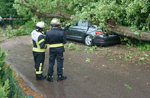 Baum kracht auf Autos und verursacht Totalschaden