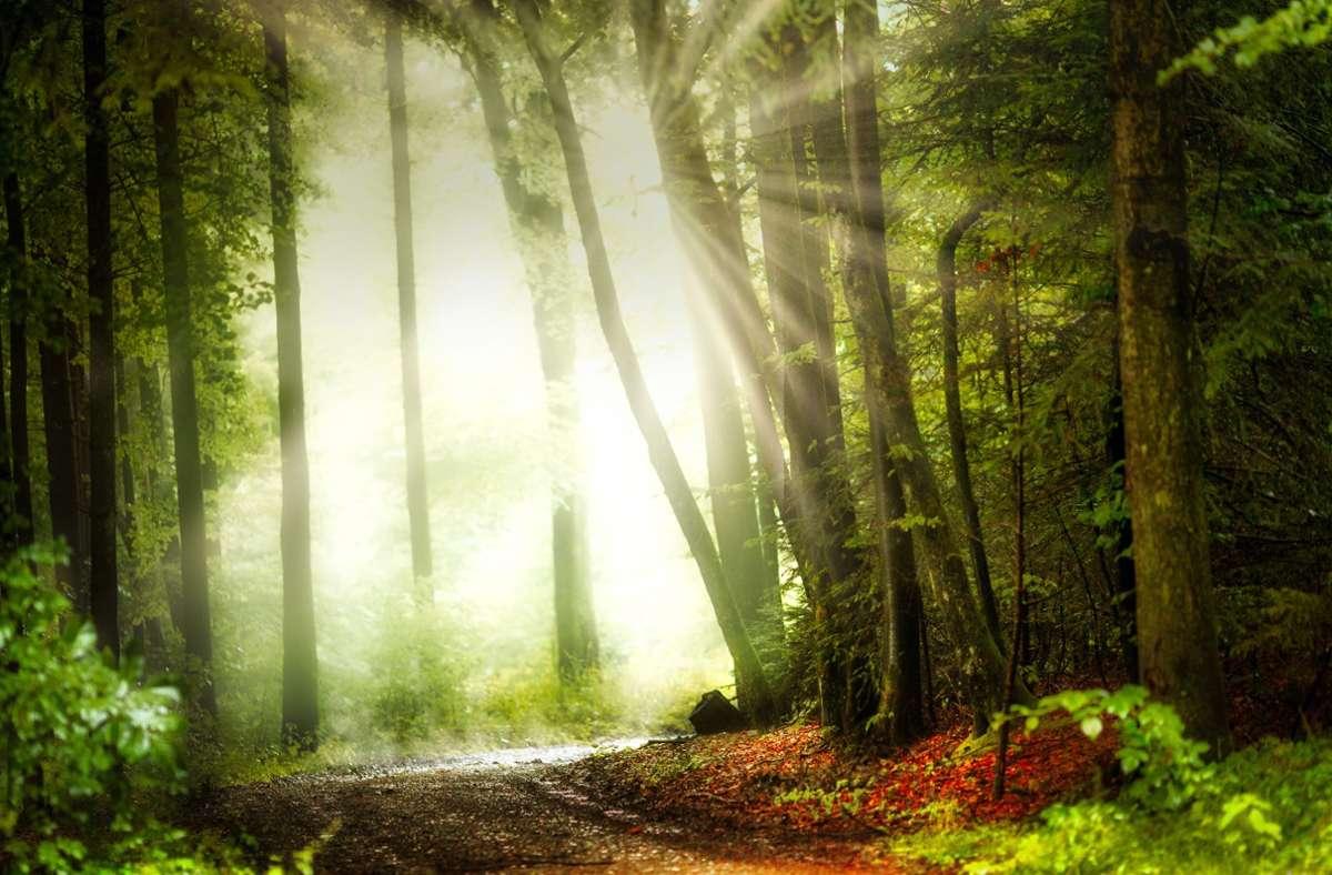 Wie sehen unsere Wälder im nächsten Jahrhundert aus? Foto: Schwäbischer Wald Tourismus/SWT