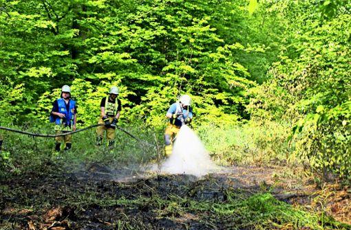 Erhöhtes Waldbrandrisiko durch Regenarmut