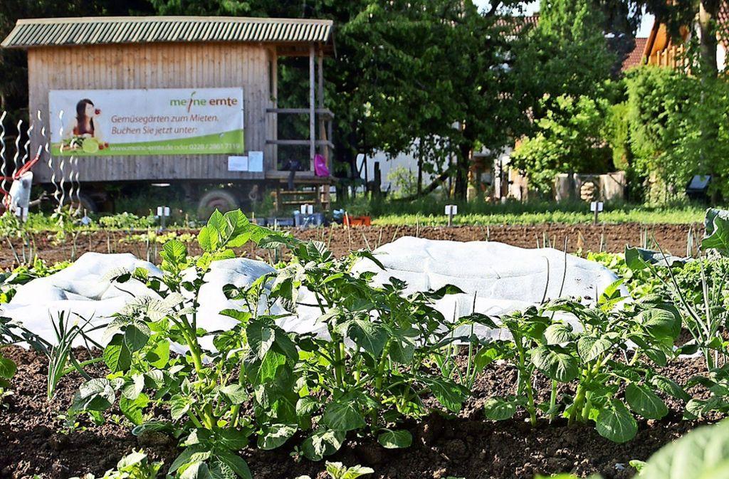 48 Quadratmeter voller Gemüse haben einige Redakteure ein halbes Jahr lang beackert. Foto: Leonie Schüler