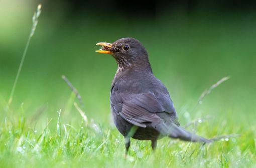 Diese Vögel singen in Stuttgart