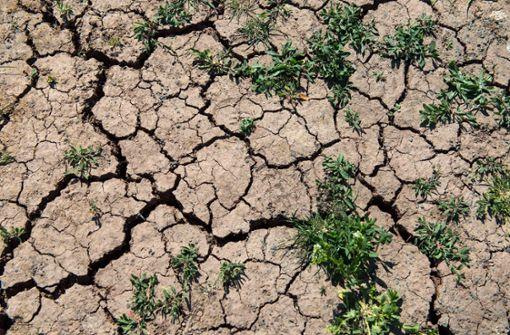 Warum die Klimakrise viel bedrohlicher als Corona ist