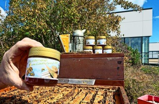 Der Biene ist die Stadt eine bessere Natur