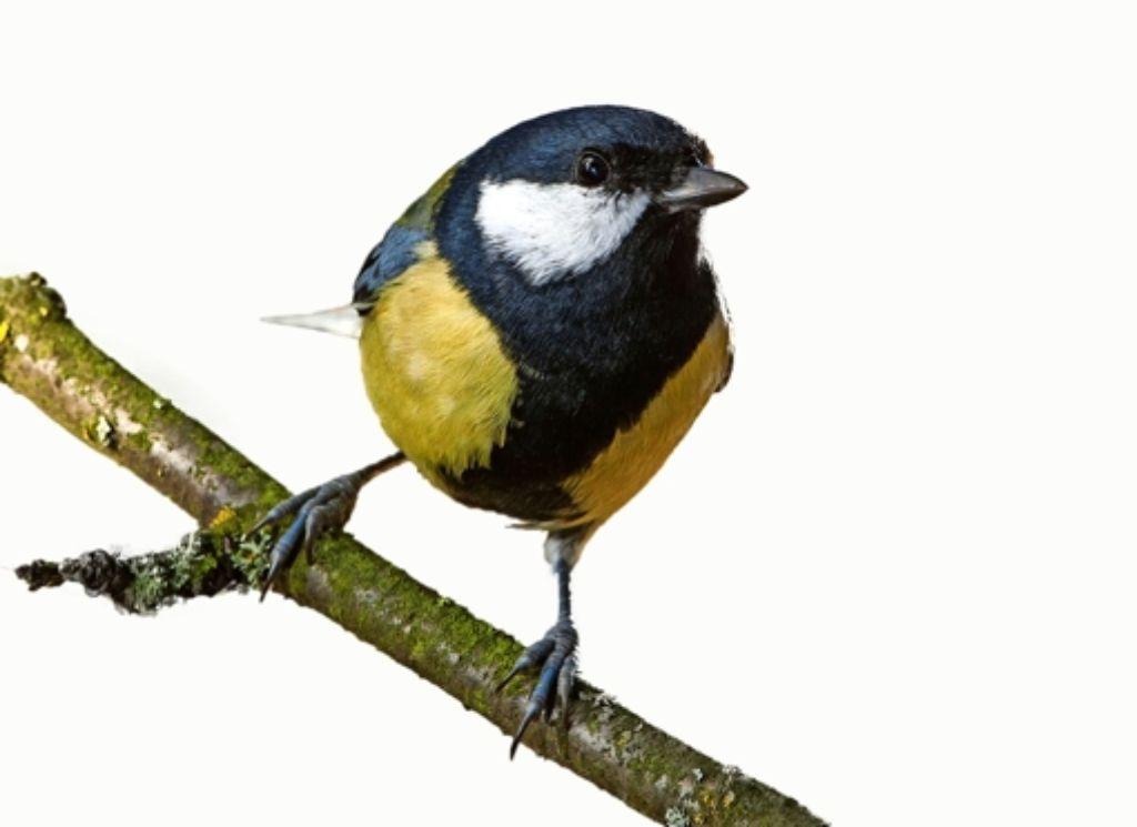 Für Singvögel könnte die Aufweichung gefährlich werden, befürchtet der Nabu. Foto: dpa