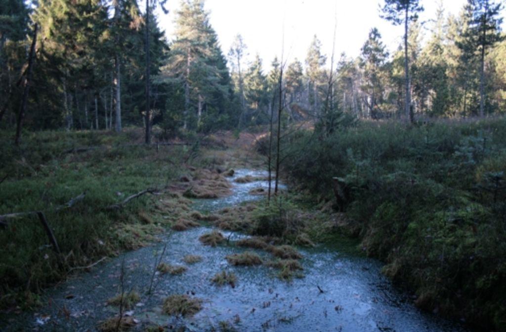 Das rund 740 Hektar große Moor  im Bodenmöser bei Isny im Allgäu ist durch die langjährige Torfstecherei in schlechtem Zustand. Es soll nun wiederhergestellt werden. Foto: NABU