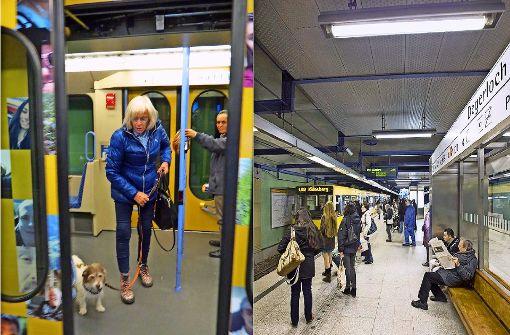 Kleiner Hund fällt zwischen Stadtbahn und Bahnsteig