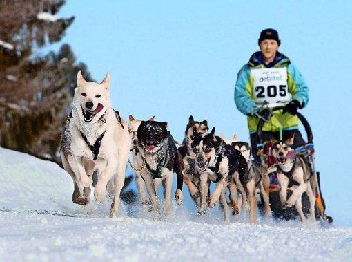 Events sollen bleibende Erinnerungen bei den Gästen schaffen: Das Schlittenhunderennen im Bernauer Hochtal gehört dazu. Foto: dpa