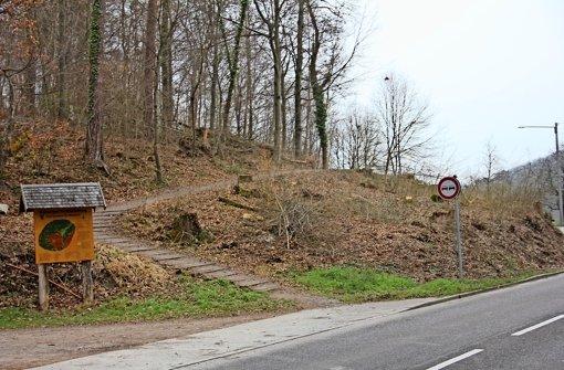 Die Bäume sind weg, der Radweg kann kommen