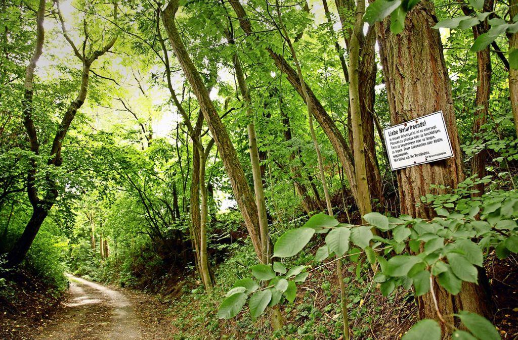 Der Markgröninger verbrachte viel Zeit im Wald beim Leudelsbach. Foto: factum/Archiv