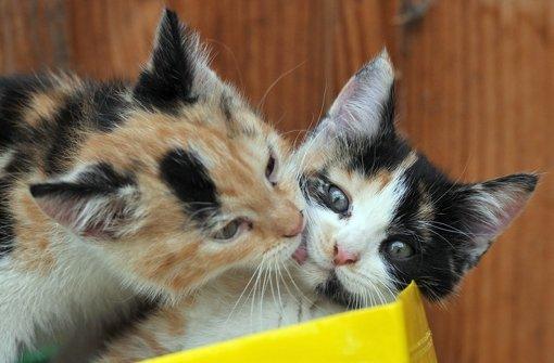 Genesung dank der Katzen