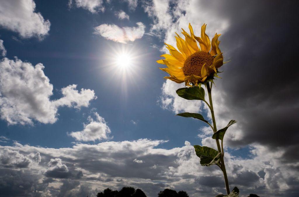 In Stuttgart soll es am Wochenende überwiegend schönes Wetter geben. Foto: dpa