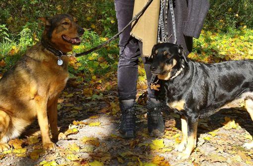 Hundehalter in Sorge um ihre Vierbeiner