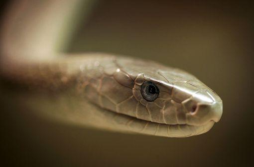 Polizei stellt 88 Kilo Schlangen sicher