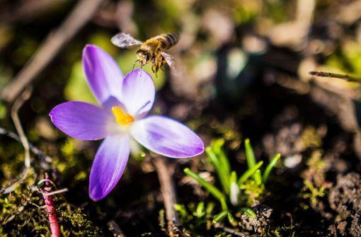 Wildbienen suchen dringend ein Zuhause