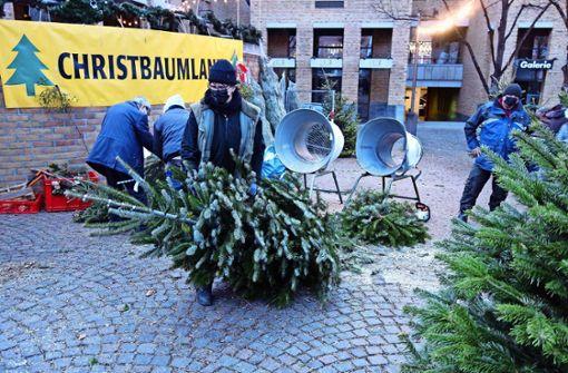 Hiesige Weihnachtsbäume sind begehrt
