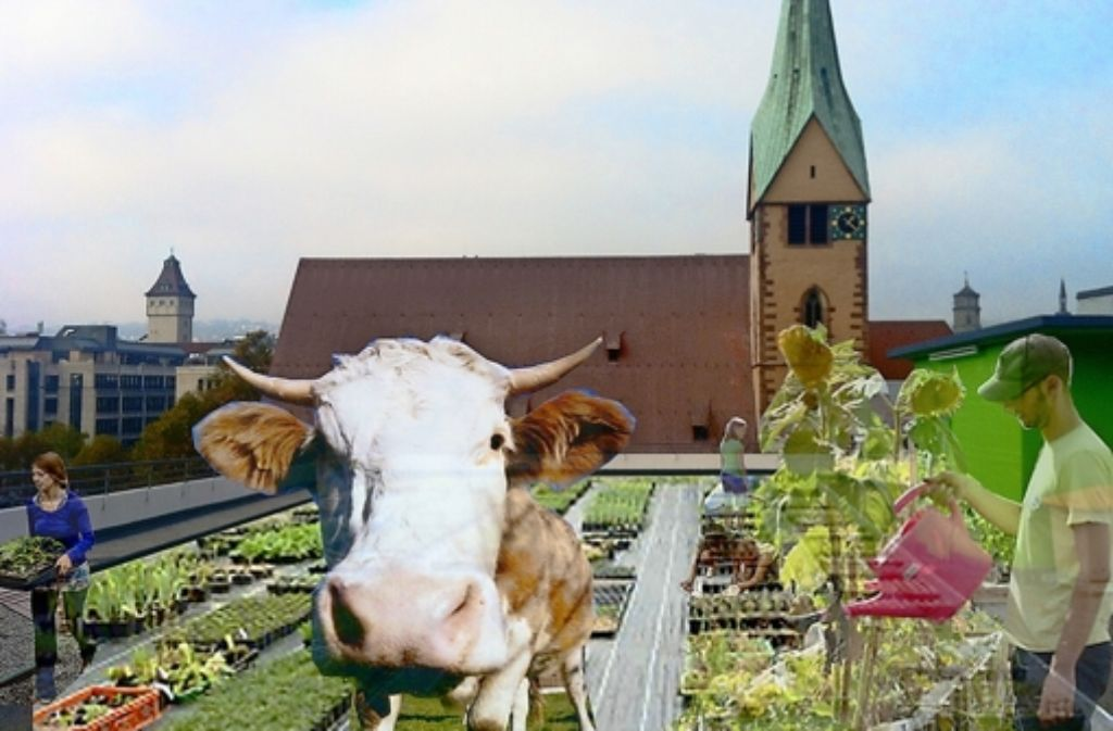 Die Kuh wird Illusion bleiben, aber ein Bienenvolk belebt  das Parkdeck.. Die Montage zeigt den theoretischen Endzustand Foto: privat