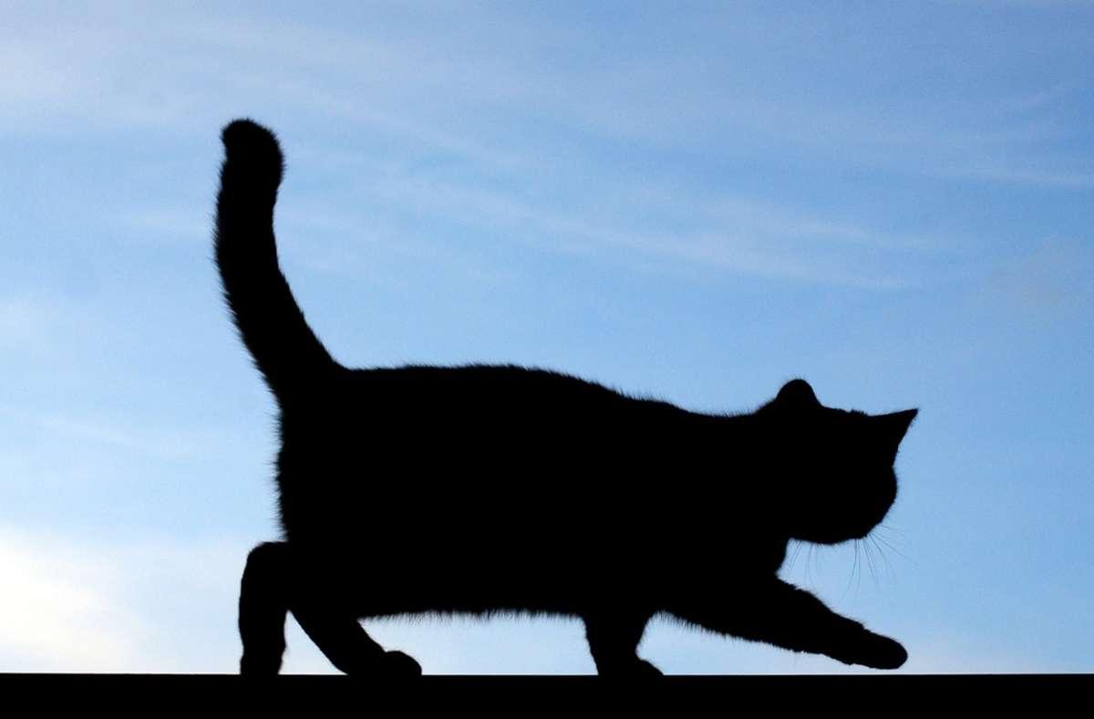 Eine Katze war in Waiblingen in einen Unfall verwickelt (Symbolbild). Foto: dpa/Patrick Pleul