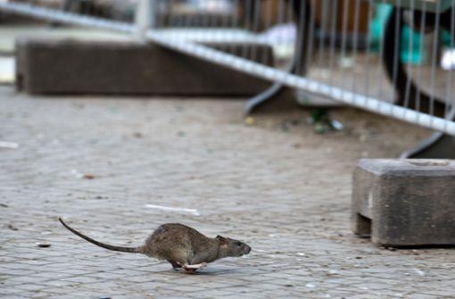 Ratte sorgt für Stromausfall – Publikum sitzt im Dunkeln