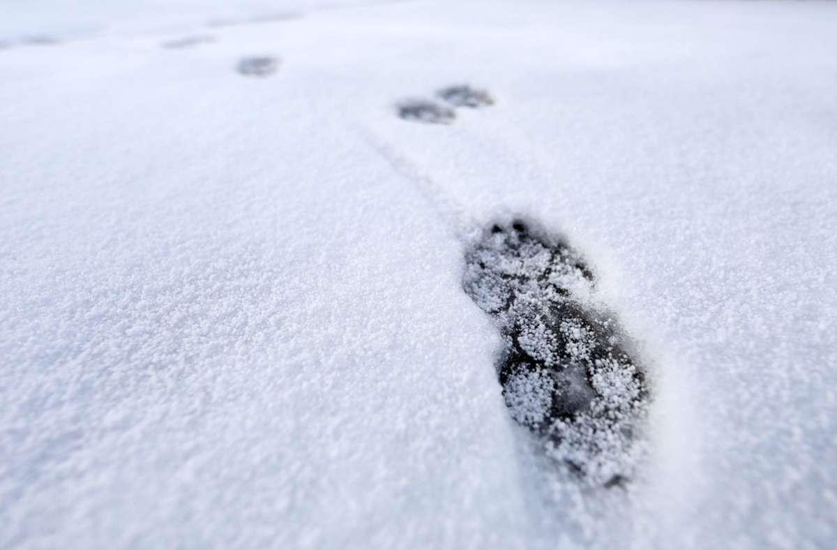 Dem Autofahrer fielen mehrere Hunde wegen ihrem Fell auf. (Symbolfoto) Foto: imago images/Karina Hessland/KH via www.imago-images.de