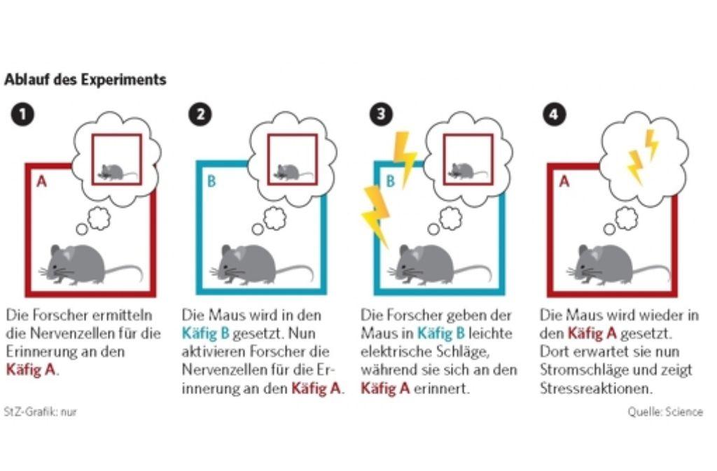 So haben Forscher bei Mäusen künstliche Erinnerungen erzeugt. Foto: StZ