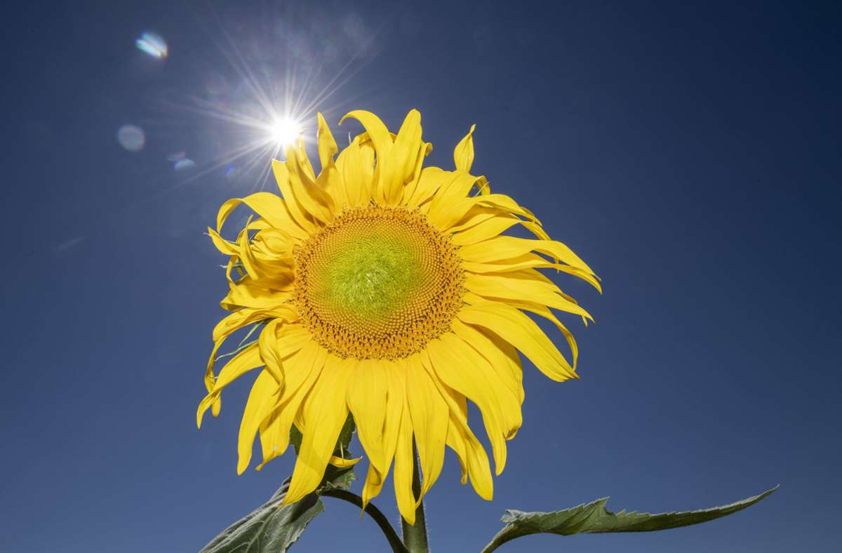 Die Sonne zeigt sich in den kommenden Tagen kräftig und auch die Temperaturen steigen wieder. Foto: dpa/Boris Roessler