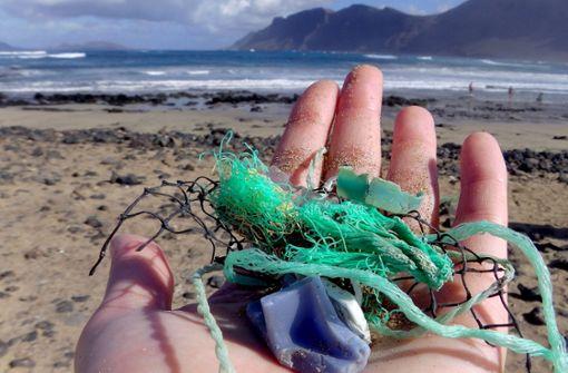 Greenpeace: Toter Wal in Sizilien hatte Magen voll Plastik