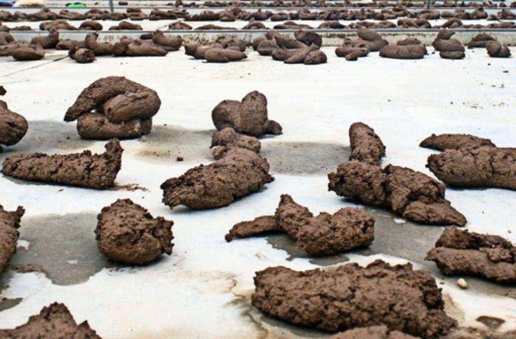Aus 250 Kilogramm Ton, Erde und Lehm  entstanden 1041 handgefertigte Kothaufen –  jeder individuell und irgendwie doch alle gleich. Ausgelegt wurden sie am Killesberg. Foto: privat