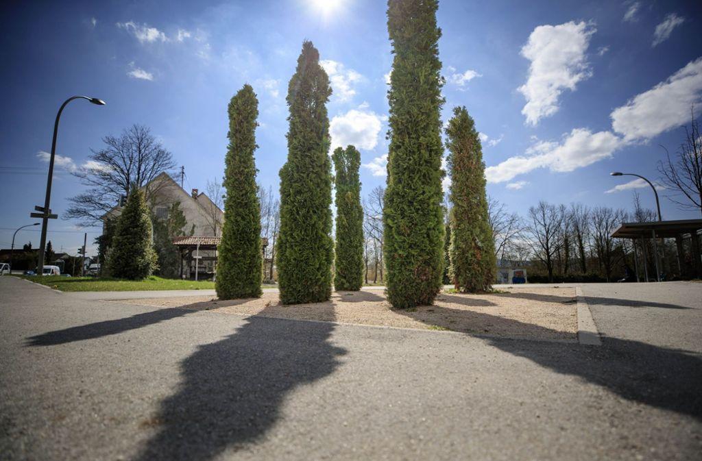 Der Alfred-Leikam-Garten ist schon fertig. Foto: Gottfried Stoppel