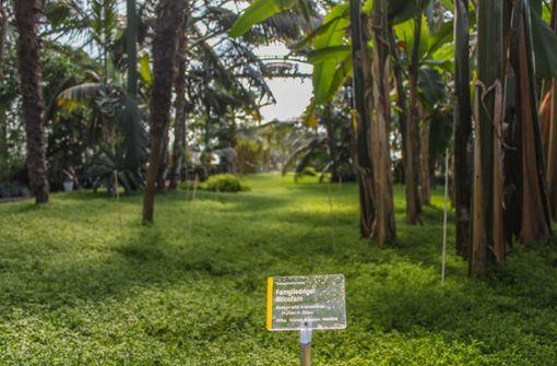 Kleine botanische Sensation