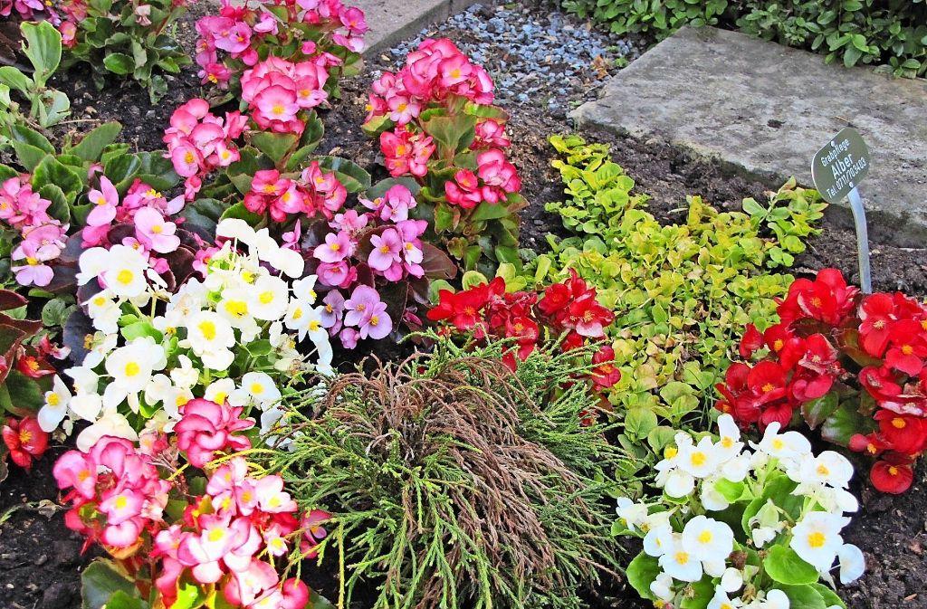 Bunt mit einer unschönen braunen Spur: Pflanzengift hat vielen Pflanzen auf dem Plieninger Friedhof geschadet. Foto: Cedric Rehman