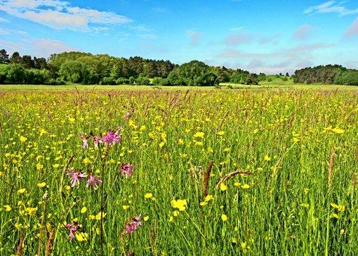 Für die   Erhaltung  der Artenvielfalt