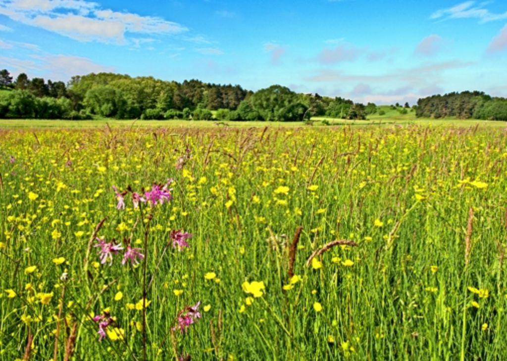Wiesen sind der Lebensraum für zahlreiche Tier- und Pflanzenarten. Foto: dpa